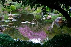 Japanese Garden Toowong (adamsgc1) Tags: brisbanebotanicalgardens toowong brisbane australia japanesegarden pink trees water pond pagoda lillies