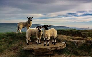 Trio of Lamb!....