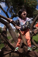 Sam Bournemouth-10.jpg (Reasonable Jim) Tags: bournemouth dante southbourne climbing tree treeclimbing