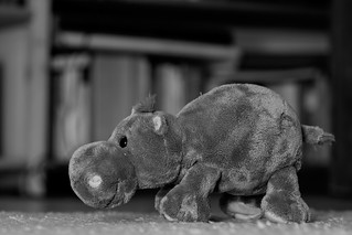 Wootan Hippo van Rheen