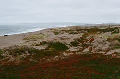 Point Reyes (bior) Tags: ektar25 kodakektar25 pointreyes california californialandscape landscape coast shore canoneosrebel2000 ef50mmf14usm ivy sand beach ocean pacificocean overcast