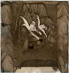 Pinhole/Mordançage (Pirogallolo) Tags: analogphoto altprocess alternativeprocess bw danilopedruzzi esperimenti fotografiaanalogica flowers fiori homemadepictures foma100 largeformat mordancage nature orchids pinhole pirogallolo pinholephotography