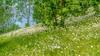 Frühlingswiese - spring meadow (ralfkai41) Tags: margeriten landscape flowers nature meadow margerites natur bäume trees plant pflanzen frenchdaisies blüten wiese landschaft outdoor blossoms frühling blumen hdr iga berlin gartenausstellung internationalegartenausstellung internationalgardeningexhibition