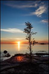 Tree in sunset (Jonas Thomén) Tags: tree träs cliff klippa hav sea water vatten sunset solnedgång långexposure longexposure nd400 filter clouds moln stenar rocks waves vågor reflection spegling