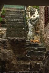 Montenegro (anuradhadeacon-varma) Tags: gingercat stonesteps steps montenegro 2016 september september2016