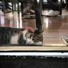 Hayat zor #DeepThoughts #CatProblems #Life #cats #Istanbul #CatsOfIstanbul (ilterocktive) Tags: hayat zor deepthoughts catproblems life cats istanbul catsofistanbul