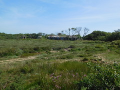 Old buildings .. Windmill Farm 14 June 2017 (ecology_garden) Tags: windmill farm cornwall lizard uk honey bees cornish heather