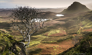 The Trotternish tree.