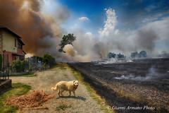 Il fuoco #Explore# (Gianni Armano) Tags: fuoco campi di grano case cascinali incendio san giuliano nuovo 16 giugno 2017 foto gianni armano photo flickr
