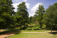 2017-06-18 Virginia Water Savill Gardens IMG_9042_1 (Darkstar Moody) Tags: virginiawater savillgardens plants flowers trees water ponds lakes wildlife gardens flora fauna