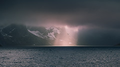 Unearthly light (Sizun Eye) Tags: light hole overcast clouds sea mountains snow lofoten hamnoy archipelago mysterious norway nordland europe sizuneye nikond750 d750 tamron2470mmf28 tamron seagull bird gettyimages