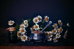 ... (riazajacova) Tags: art still spirit spring may dream fragile flower feeling magic light home retro nature soul vintage love poetic