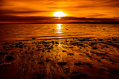 Golden Rays On The Beach (Brian Travelling) Tags: largs sunset silhouette water sky pentaxkr pentax pentaxdal golden amber red scotland scenery firthofclyde clouds