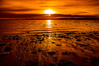 Golden Rays On The Beach