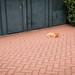 Red Room Cat-4441