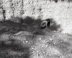 J. (denzzz) Tags: portrait blackwhite blackandwhite skancheli wista45dx 4x5 largeformat kodak tmax400 artisticnude fujinona 240mm analogphotography filmphotography