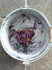 CENERE E PETALI DI ZAFFERANO (Anna Rita Di Barnaba www.zaffineria.com) Tags: zafferano cenere saffron