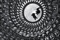 UK - London - Kew Gardens - The Hive 07_mono_DSC4400 (Darrell Godliman) Tags: uklondonkewgardensthehive07monodsc4400 lookingup structure thehive hive wolfgangbuttress bdp stageone simmondsstudio pavilion installation kewgardens royalbotanicalgardens kew richard richmonduponthames london england britain greatbritain unitedkingdom uk gb europe contemporaryarchitecture modernarchitecture architecture building ©dgodliman darrellgodliman wwwdgphotoscouk dgphotos allrightsreserved copyright travel tourism britishisles capital city instantfave omot flickrelite travelphotography travelphotographer architecturalphotography architecturalphotographer sepia mono monochrome bw blackandwhite
