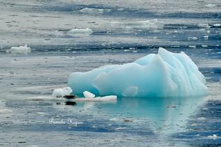 Iceberg and Harbor seals
