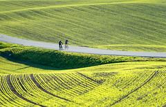 Springtime is time for cycling (harald.bohn) Tags: sykkel cycle spring vår grønn grønt green eng enger landsakp landscape fields