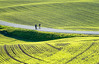 Springtime is time for cycling - in Explore 4/8-17 (harald.bohn) Tags: sykkel cycle spring vår grønn grønt green eng enger landsakp landscape fields