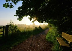 Morning mist (gillybooze) Tags: ©allrightsreserved vista sunrise trees sky mist bench outdoor leaves gate shadows twinkle sunstar path weather fence
