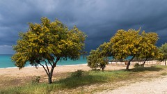 Vrachos beach - Greece (massonth) Tags: canon g7x beach storm blue yellow bloum flower tree sea ionian sand waves epirus greece europe landscape