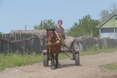 promenade (vtossuma) Tags: charrette nature delta danube cheval roumanie