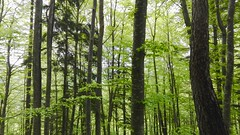 New life (Alessio Bertolone) Tags: wood forest bosco foresta alberi trees leaves foglie verde green trentino it italy italia