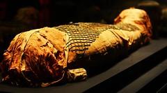 Mısır'daki Mumyalarda Anadolu İzi... (istekocaeli) Tags: afrika almanya anadolu antikmısır avrupa dna israil istekocaeli kocaeli kocaelihaber lübnan mısır mö1400 mumya suriye ürdün