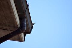 Profili (Fredderica) Tags: profilo sky bird uccellino animali animals nature natura cielo