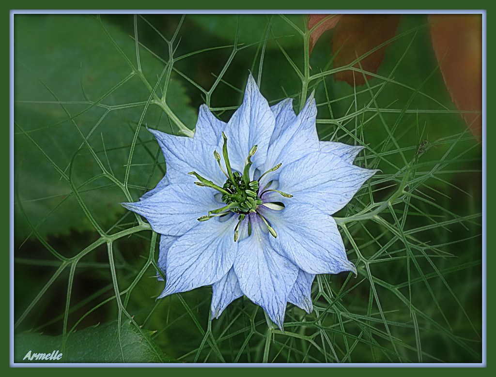 The world 39 s best photos of damas flickr hive mind - Nigelle de damas ...