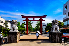 The approach of Tsuruoka Hachimangu Shrine : 鶴岡八幡宮参道 (Dakiny) Tags: 2017 spring may japan kanagawa yokohama kamakura city street outdoor landscape architecture shrine torii statue tsuruokahachimangu people sky blue nikon d7000 sigma 1770mm f284 dc os hsm sigma1770mmf284dcmacrooshsm nikonclubit