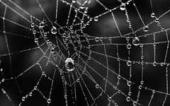 Oh what a tangled web we weave (PeskyMesky) Tags: web spider spidersweb macro aberdeen monochrome blackandwhite bw pov pointofview dof