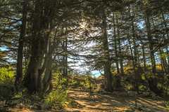 Cedars View (HJP Photography) Tags: cedars nature tree green