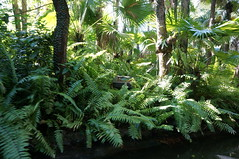 """Walt Disney World: The Jungle Book • <a style=""""font-size:0.8em;"""" href=""""http://www.flickr.com/photos/28558260@N04/34750289895/"""" target=""""_blank"""">View on Flickr</a>"""