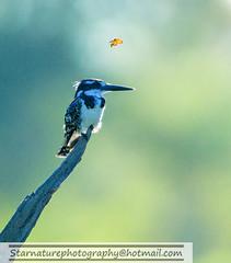 _DJA3750 copy (naturephotographywildlife) Tags: kruger wildlife scenery animals birdlife a99ii africa park