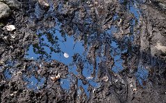 Mud Puddle (Jay Janssen) Tags: mud puddle water moon reflection trees escher inspired