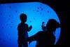 Shanghai Ocean Aquarium (待宵草 (Gino Zhang)) Tags: 11891 50mm a7rmarkii cropped ff fullframe ilce7rm2 leica lujiazui mirrorless sony shanghai summilux summiluxm summiluxm11450asph a7rii alpha 上海 陆家嘴 陸家嘴