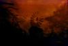 [    - a tilting standoff? -    ] (ǝlɐǝq ˙M ʍǝɥʇʇɐW) Tags: film redscale dragon camera profile cursedfuji standoff windmill tilting eternallytilting multipleexposure trees wintertrees redsky red redredredred color experiment sky texas black filmrules whereismymind pixies music lospixies mrtrona