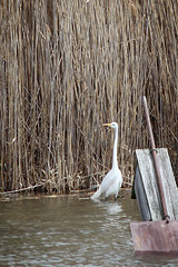 Tommy Thompson Park (mtnbiker404) Tags: great egret tommy thompson park leslie spit