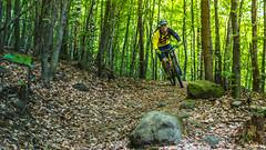 2017.05.25 Borsberg-2 (Michael_Topp) Tags: sony nex 3 baum wald dresden mountainbike fahrrad licht