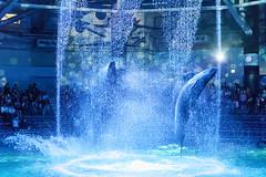 DSC00850 (Jun.Ohashi) Tags: aquaparkshinagawa aquarium shinagawa アクアパーク品川 品川 水族館 港区 東京都 日本 jp sony ソニー ilce9 α9 sonyalphaa9 a9 alpha9 tamronspaf2875mmf28xrdildasphericalifmacroa09 tamron タムロン sp 2875mm f28 di ld aspherical if macro a09