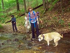 P5282355 (Jean Arf) Tags: memorialdayweekend spring 2017 virginia bathcounty douthatstatepark trail hike kerry sue nora greg pickles dog pitbull creek stream cross crossing