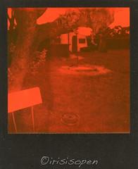 Oase # 001 # Polaroid ONE600 Impossible Black&Orange - 28-5-2017 (irisisopen ☼the seeker☀︎) Tags: polaroid one 600 impossible duochrome black orange irisisopen