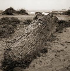 adrift (stormiticus) Tags: mf mediumformat rolleiflex kodak tmy2 rodinal film analog pacificgrove driftwood