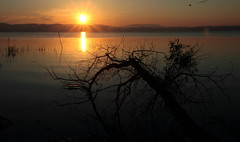 2516- il primo sole del mattino ... :) (Betti52) Tags: alba castigliodellago umbria italia post21062017