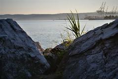 Bay (aaliiys) Tags: croatia trip may spring sunset architecture sea ocean adriatic bay bike pine window alley avenue koper slovenia hrvatska