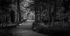 To the Slippery Elm (Ryan Crouch Photography) Tags: landscape nikon black white bridge woods trail sunlight hike slippery elm d7200