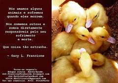 Estranho (veganospelaabolicao) Tags: animal exploração pensamento escravidão especismo garylfrancione garyfrancione